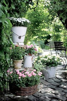 Tiered Potted Roses in Planters cottage garden pots Stunning Cottage Style Garden Ideas to Create the Perfect Getaway Spot Garden Cottage, Garden Pots, Potted Garden, Herbs Garden, Garden Living, Willow Garden, Cottage Porch, Cottage Bedrooms, Garden Benches