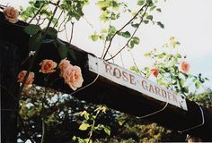 roses are great gifts