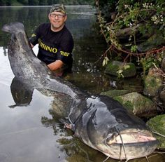 Huge fish and other sea creatures : theCHIVE