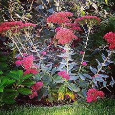 Növény, kertépítés tavasszal Land Scape, Flowers, Plants, Plant, Royal Icing Flowers, Flower, Florals, Floral, Planets