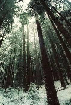 Image shared by ▲. Find images and videos about nature, winter and snow on We Heart It - the app to get lost in what you love. Olympic National Forest, Tree Forest, Snowy Forest, Heaven On Earth, Winter White, The Great Outdoors, Mother Nature, Woodland, Illustration