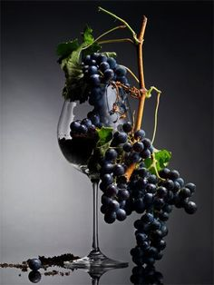 Nadire Atas on Wine Making From Grapes = Adult Grape Juice Thank God It's Fermented . Wine Images, Wine Vineyards, Wine Photography, Types Of Wine, Wine Art, Grape Juice, In Vino Veritas, Wine Cheese, Italian Wine