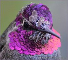 The ultimate color inspiration, direct from nature.so obsessed! I need to paint with these colors ASAP! And of course it is my favorite bird, the majestic little hummingbird and my favorite color too. Pretty Birds, Love Birds, Beautiful Birds, Beautiful Life, Exotic Birds, Colorful Birds, Hummingbird Pictures, Hope Is The Thing With Feathers, Owl Bird