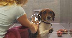 Se Este Vídeo Sobre a Adoção De Animais Não o Comove, Então Algo De Errado Se Passa