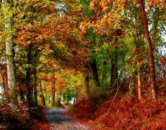 Country roads - take me home