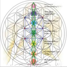 Within the Eastern school of thought we have the corresponding chakra centers situated at octave intervals throughout the human body. The center of the geometry is the heart -