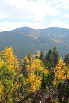 Just beautiful. Golden aspen foliage with more on slope in background.  fall color at Golden Gate Canyon State Park in Colorado -- Rocky Mountains in autumn