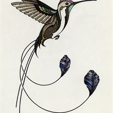 Spatule Tail Hummingbird | Posterdesign to protect the ...
