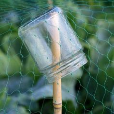 To hold up protective netting,,,small jar is great idea to prevent stake from going through. Great idea for Tommy's veggie garden!