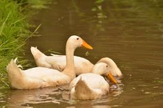 Bird, Photography, Animals, Animales, Animaux, Photograph, Birds, Fotografie, Animal