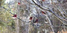 Sue Jordan's beautiful finches prove that weather-proofing isn't always necessary