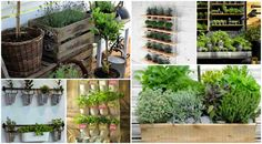Herbs garden on balcony images and ideas | Diy Fun World