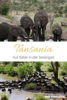 Auf den Spuren der Großen Migration in der Serengeti Wildlife Fotografie, Zanzibar Beaches, Tanzania Safari, Beach Holiday, Zebras, Travel Guide, Road Trip, National Parks, Elephant