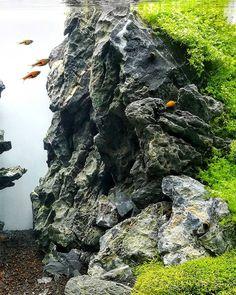 "571 Likes, 3 Comments - Michał Adamek (@natural_aqua_technique) on Instagram: ""Beauty of stones #Aquascaping #aquarium #iwagumi #nature #natureaquarium #akwarium #plantedtank…"""
