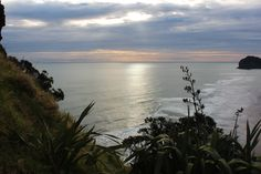 Piha Beach. Taken up Lion Rock. Photo taken by Tim Whiting (Me)