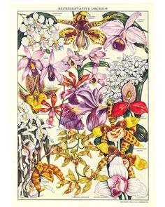 Would love to find some vintage orchid prints!
