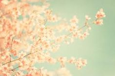 vintage floral photography - Google Search