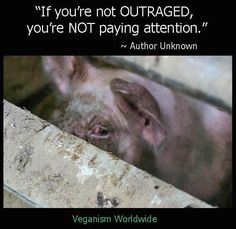 if you are not outraged you are not paying attention ~ author unknown ~ meat is murder #vegan