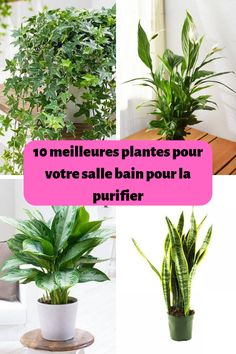 10 meilleures plantes pour votre salle bain pour la purifier We have plants on the terrace, in the living room, in the hallway … even in the kitchen! But what about the bathroom?