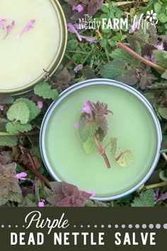 How to Make Purple Dead Nettle Salve recipes!) How to Make Purple Dead Nettle Salve recipes!) – Learn how to make helpful herbal salves using purple dead nettle and other beneficial plants. Healing Herbs, Medicinal Plants, Natural Healing, Holistic Healing, Natural Oil, Herbal Plants, Natural Beauty, Natural Home Remedies, Herbal Remedies