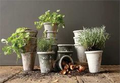 5-1/4 Round x 6-1/4H Clay Pot, Distressed Finish, 4 Styles, Holds 4 Pot (Each One Will Vary)