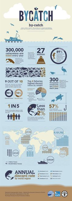 Mad as a Marine Biologist : Bycatch