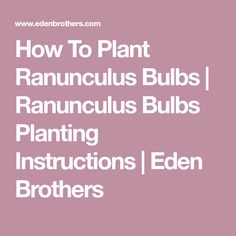 How To Plant Ranunculus Bulbs | Ranunculus Bulbs Planting Instructions | Eden Brothers Planting Bulbs, Ranunculus, Red Roses, Plants, Persian Buttercup, Plant, Planets