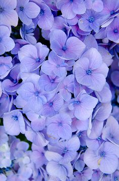 Photo by Tina & Horst Herzig Photography Look Wallpaper, Purple Wallpaper Iphone, Flower Background Wallpaper, Flower Phone Wallpaper, Flower Backgrounds, Aesthetic Iphone Wallpaper, Aesthetic Wallpapers, Purple Flowers Wallpaper, Lavender Aesthetic