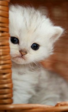 Cute Kittens Girl Names Cute Cats And Dogs Doing Funny Things Kittens And Puppies, Cute Cats And Kittens, Baby Cats, Kittens Cutest, Baby Kitty, Ragdoll Kittens, Kitty Kitty, Sleepy Kitty, Bengal Cats
