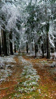 24cb2aafbd fir-trees hoarfrost winter road earth branches 50185 640x1136