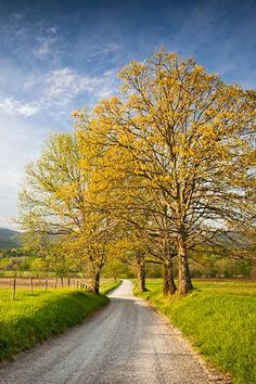 The Cades Cove Drive is an 11-mile, one-lane scenic loop around the Great Smoky Mountains National Park in Tennessee.