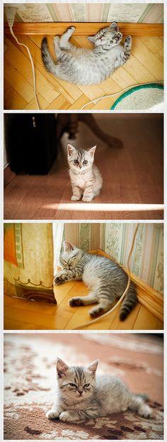 My mini pi is on kittens