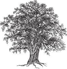 A List of Truly Enchanting Irish Celtic Symbols and Their Meanings - Historyplex White Oak Tree, Oak Tree Tattoo, Tree Tattoo Designs, Tattoo Ideas, Celtic Symbols, Irish Symbols And Meanings, Celtic Knots, Irish Celtic, Art Icon