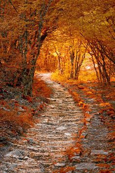 Autumn Path by Rainer Sasse