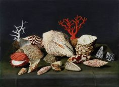 Jacques Linard,  (Troyes 1597-1645 Paris) Still life with shells and coral Panel, 47 x 64 cm
