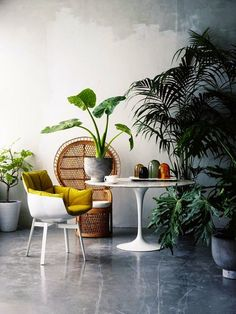 Airy Interior With Tropical Ideas