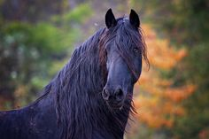 Vote for Harrison to win, they'll be featured on Horse.com's home page and Facebook page, plus we can win a $1,000 Horse.com Shopping Spree. Please help us and vote today!