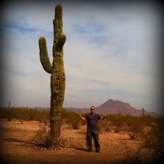 Saguaro in Arizona