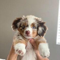 Super Cute Puppies, Cute Baby Dogs, Cute Dogs And Puppies, Cute Babies, Funny Puppies, Doggies, Bulldog Puppies, Puppies Puppies, Adorable Dogs
