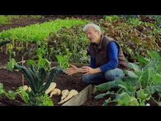 No dig with Charles Dowding, showing his fourth summer at Homeacres - YouTube
