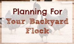 Backyard Chickens - Planning for Your Flock :: Five Little Homesteaders