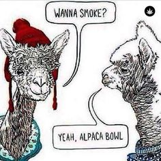 We got #jokes. . . #vegascannabis #weedjokes #marijuanajokes #alpaca #bowls #weshouldsmoke #marijuana #weed #cannabis #vegas #whathappensinvegas #weedmeme #marijuanameme #meme #smokeweedeveryday #tuesday #lunch #picoftheday #funny #animals #sketch #sketchart #humpday