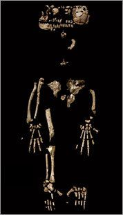 Top 10 Rare and Important Archeological Finds. Ardi is the designation of the fossilized skeletal remains of a female Ardipithecus ramidus, an early human-like species 4.4 million years old.