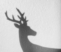 i love deer so fuckjn much,,, Lily Evans, Artemis, Narnia, Alina Starkov, Howleen Wolf, The Grisha Trilogy, Catty Noir, Harry Potter Aesthetic, Harry James Potter