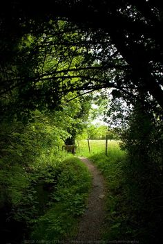 Pathway to the well, Legan, Co. Longford, Ireland.
