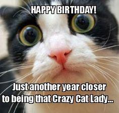 Best 26 Cat Birthday Meme