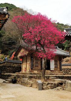Korean shrine in the spring