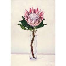 Image result for protea flower arrangement still lifes