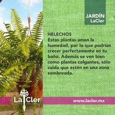 ¡¡Puedes colgarlas donde sea para darle vida a tus habitaciones!!   Foto de: http://static.mercadoshops.com/   #jardin #plantas #garden #homedecor #decoracion #hogar