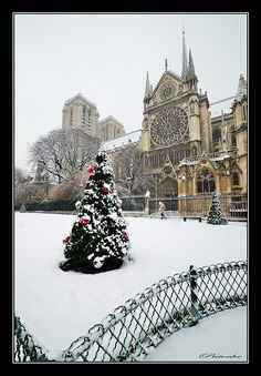 Christmas in Notre Dame, Paris.. want to go here more than anything <3